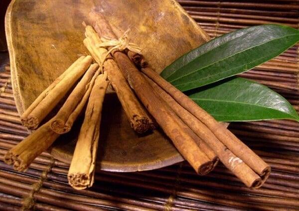 Plantas medicinais - Conheça o poder dessas plantas!