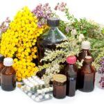 Plantas medicinais – Conheça o poder dessas plantas!