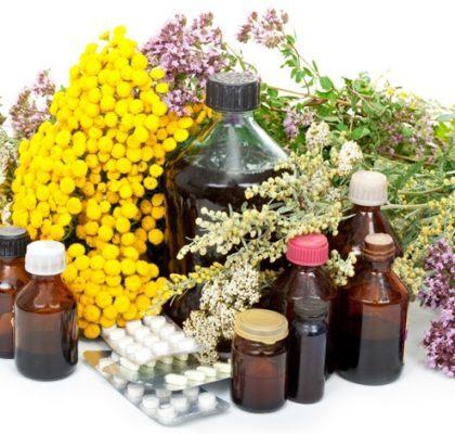 Plantas medicinais. Conheça o poder dessas ervas!