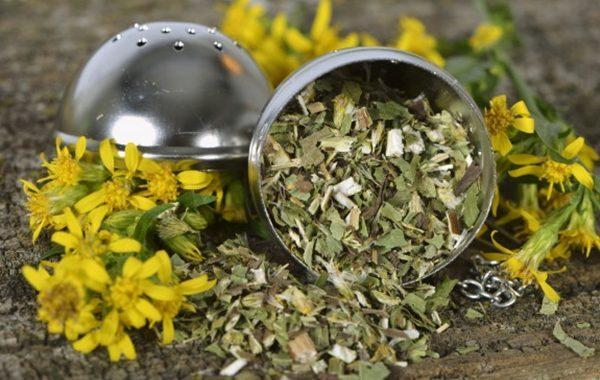 Chá de virgaurea contra gripes e resfriados