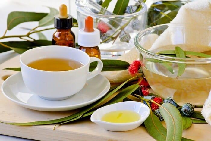 Chá de eucalipto: aprenda a fazer e suas propriedades